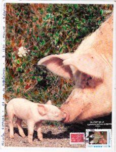 theme cochon