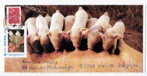 art postal theme cochon