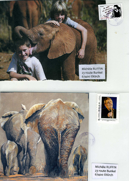 elephant_382