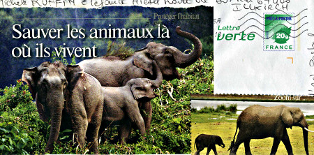 elephant390